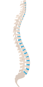 neck structure