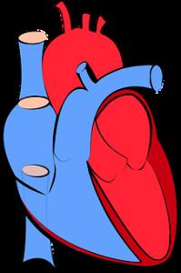 Vitamin D has Cardiovascular effects