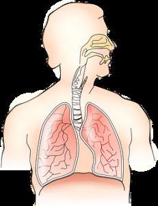 Respiratory Effect of Vitamin d